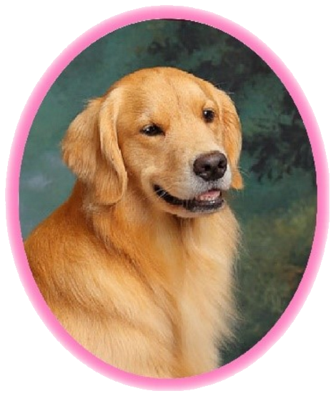 Portrait of 2-year-old Golden Retriever named Pink in an oval frame with a pink outline