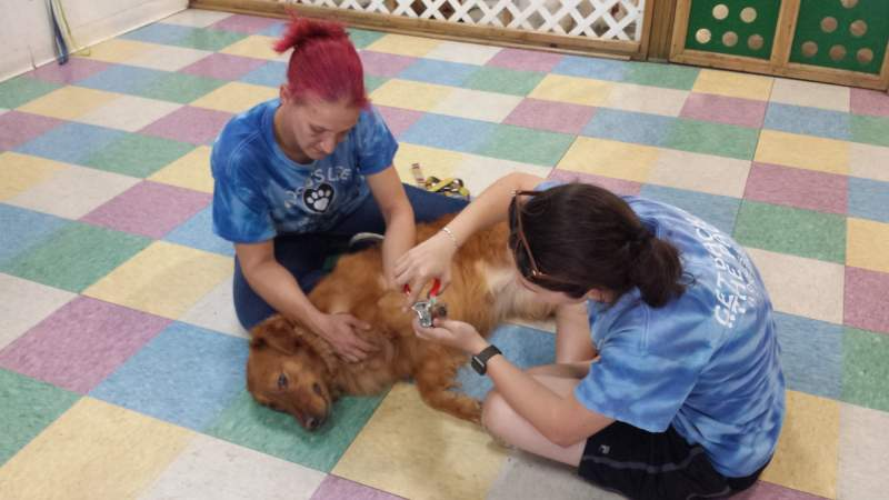 Two ladies sitting on checkered floor one cradling a golden retriever in her lap while the other trims the dog's nails